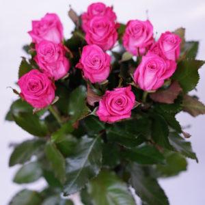 Роза Космик