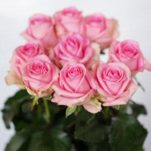 Роза Ревайвал