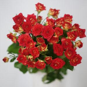 Роза Рубиэлла