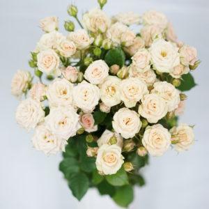 Роза Яна